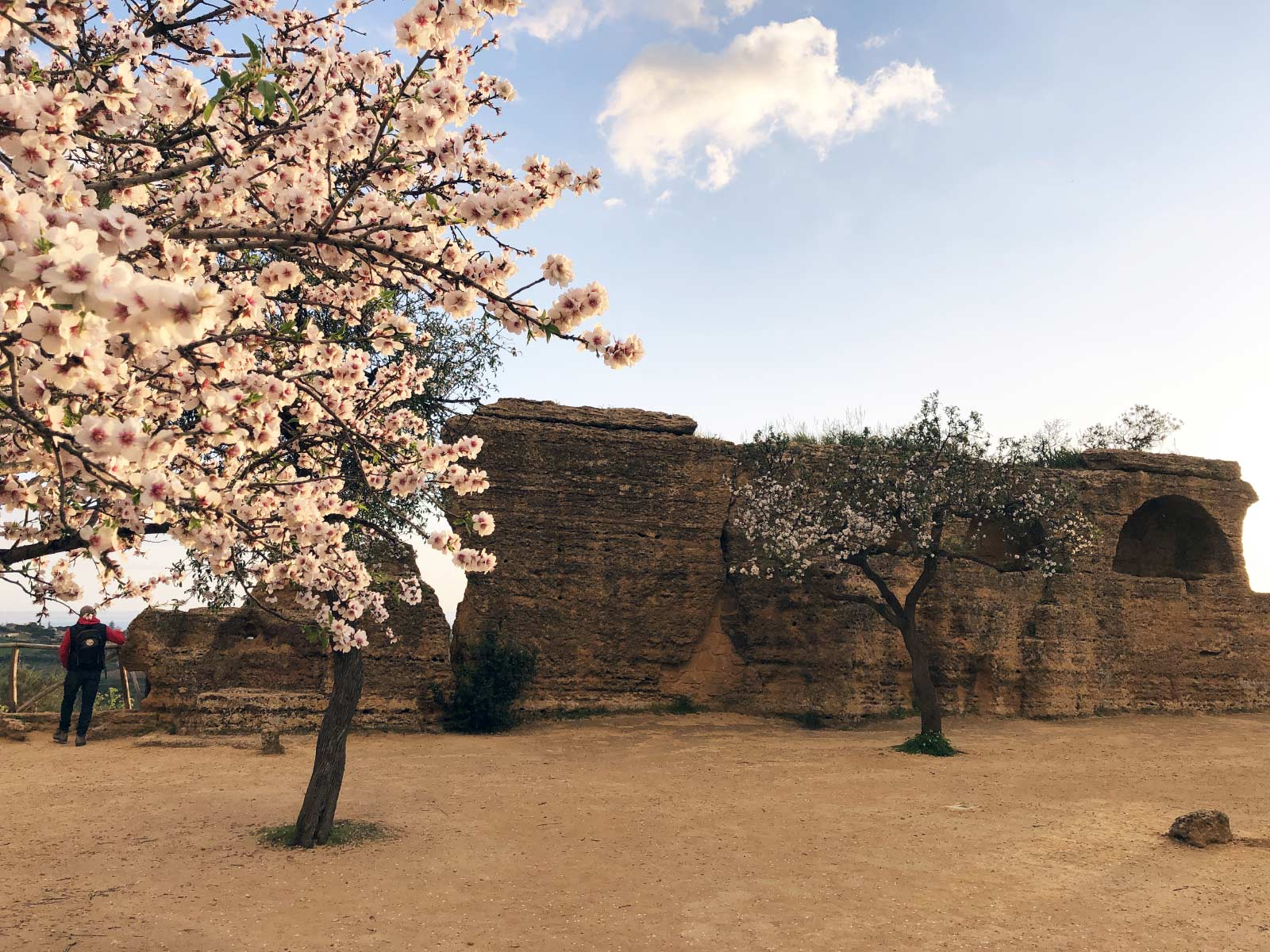 Le tombe ad arcosoli scavati nelle fortificazioni meridionali con i mandorli fioriti