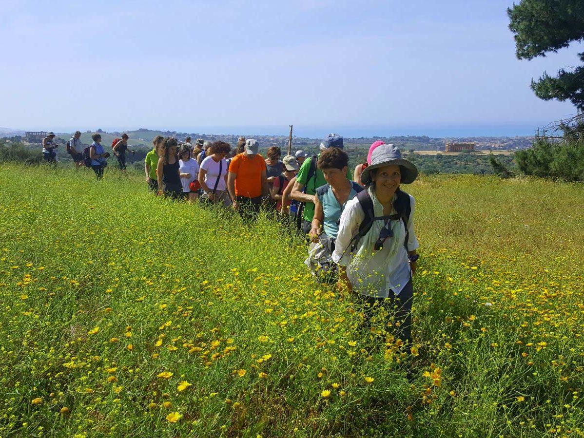 Laura Danile alla testa di un gruppo numeroso di adulti camminatori in un campo di margherite gialle con la collina dei templi sullo sfondo