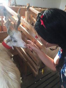 Io e una capra girgentana nel caprile di Valeria e Peppe